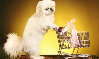 The shopping trolley of life